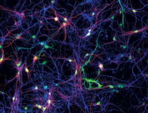 neurons-synapse